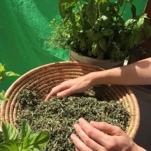 herbs3